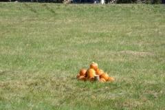 080_target_pumpkin_pile