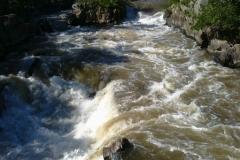 Swim Call on Potomac at Great Falls